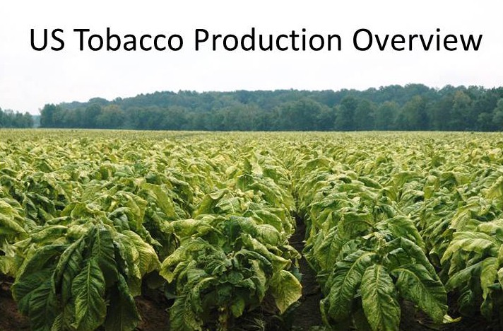 US Tobacco Production Overview