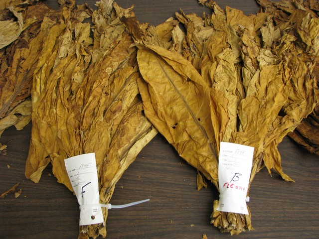 Tobacco Leaf Sample